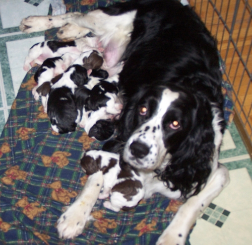 Pepper and Pups